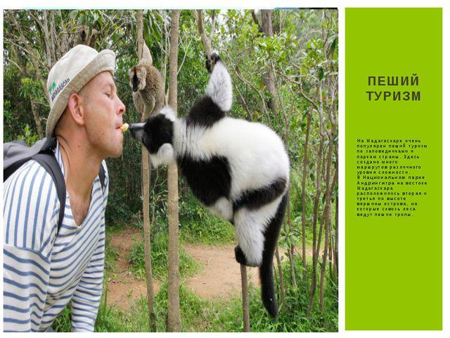 На Мадагаскаре очень популярен пеший туризм по заповедниками и паркам страны....