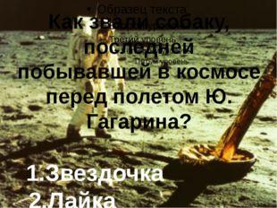 Как звали собаку, последней побывавшей в космосе перед полетом Ю. Гагарина?