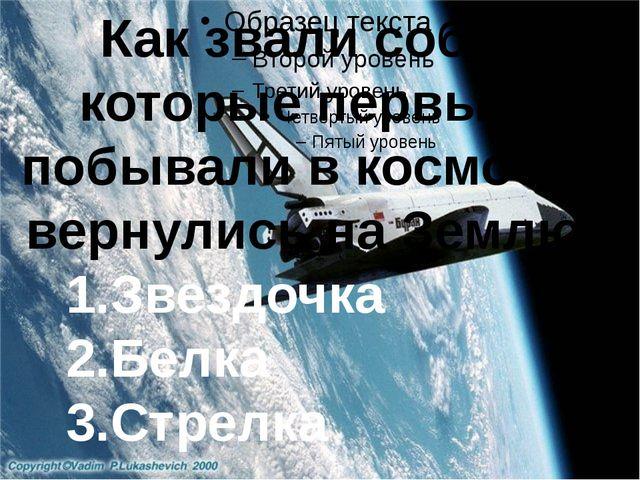 Как звали собак, которые первыми побывали в космосе и вернулись на Землю? 1....