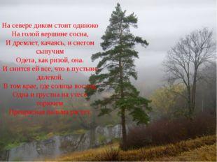 На севере диком стоит одиноко На голой вершине сосна, И дремлет, качаясь, и с