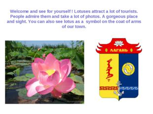 Welcome and see for yourself ! Lotuses attract a lot of tourists. People admi