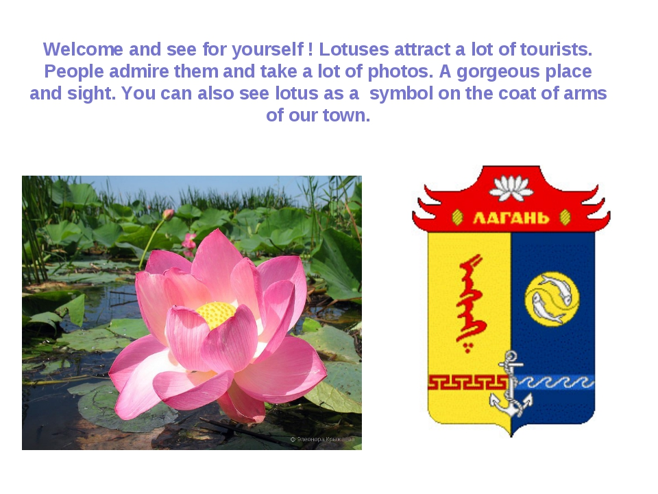 Welcome and see for yourself ! Lotuses attract a lot of tourists. People admi...