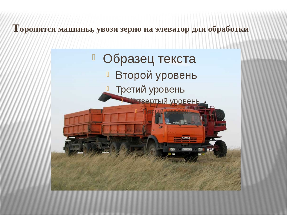 Торопятся машины, увозя зерно на элеватор для обработки