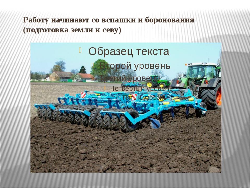 Работу начинают со вспашки и боронования (подготовка земли к севу)