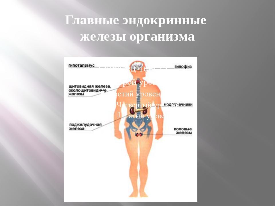 Главные эндокринные железы организма