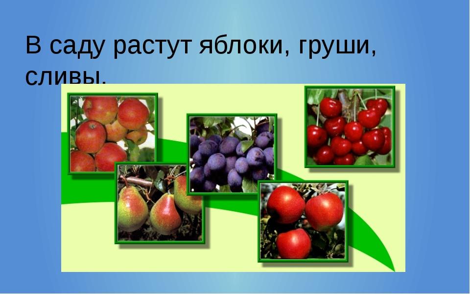 В саду растут яблоки, груши, сливы.