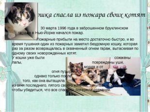 Кошка спасла из пожара своих котят  30 марта 1996 года в заброшенном бруклин