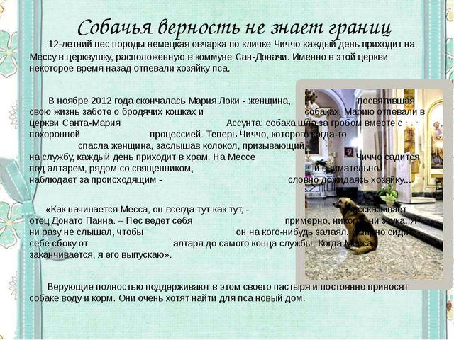 Собачья верность не знает границ 12-летний пес породы немецкая овчарка по кл...