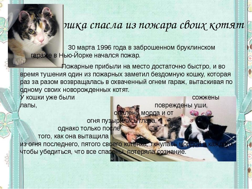 Кошка спасла из пожара своих котят  30 марта 1996 года в заброшенном бруклин...
