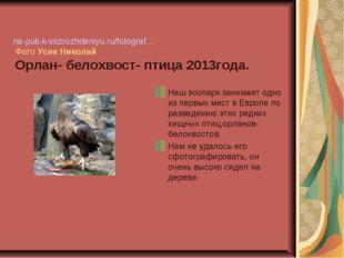 na-puti-k-vozrozhdeniyu.ru/fotograf... Фото УсикНиколай Орлан- белохвост-