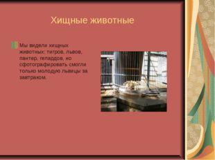 Хищные животные Мы видели хищных животных: тигров, львов, пантер, гепардов,