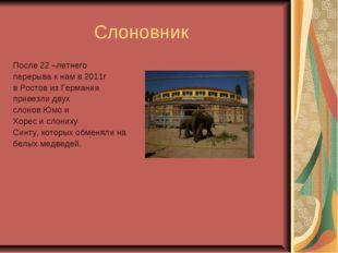 Слоновник После 22 –летнего перерыва к нам в 2011г в Ростов из Германии прив