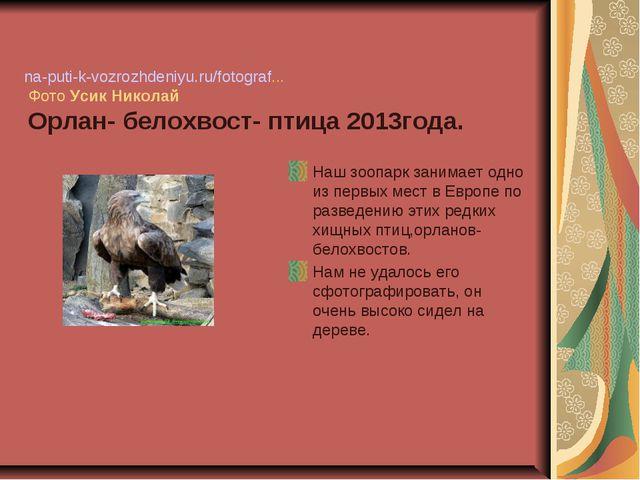 na-puti-k-vozrozhdeniyu.ru/fotograf... Фото УсикНиколай Орлан- белохвост-...