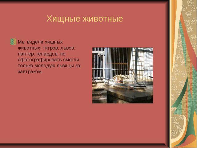 Хищные животные Мы видели хищных животных: тигров, львов, пантер, гепардов,...