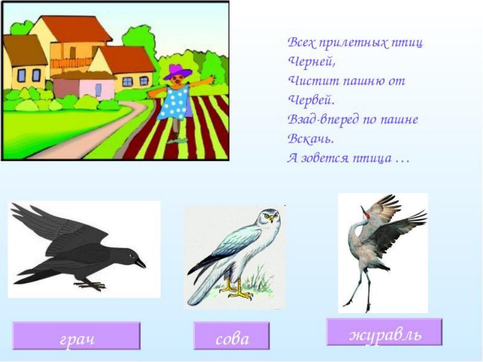 загадки о птицах в картинках детям административный