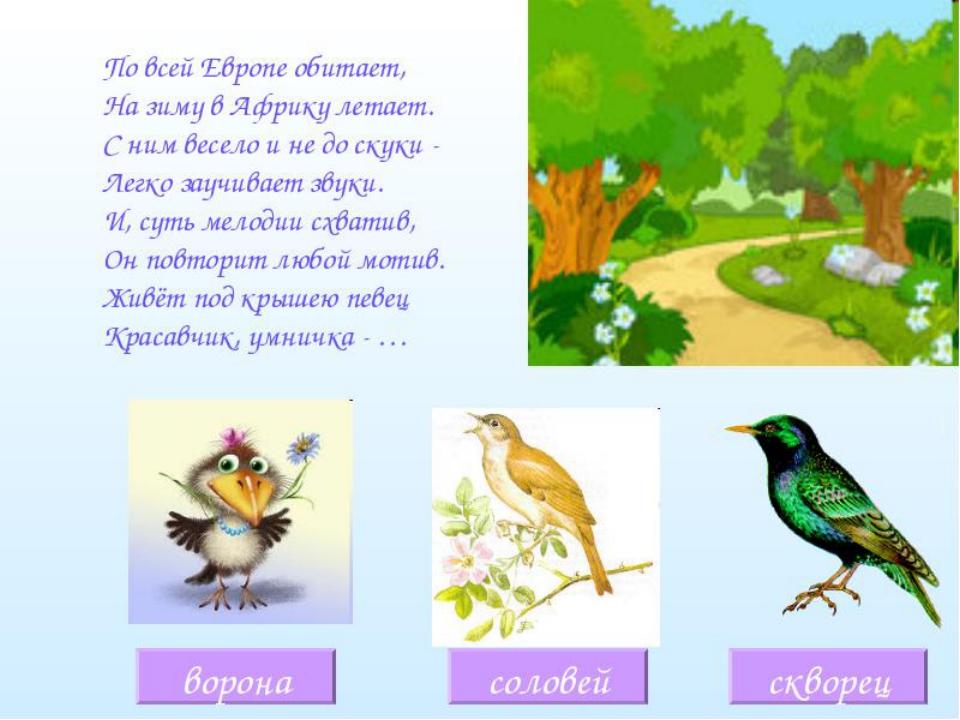 загадки с картинками про птиц песен исполнителя