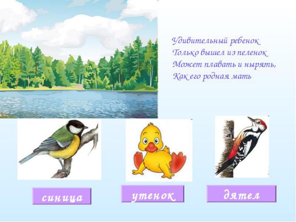 включается схему загадки с картинками про птиц поговорила артистом