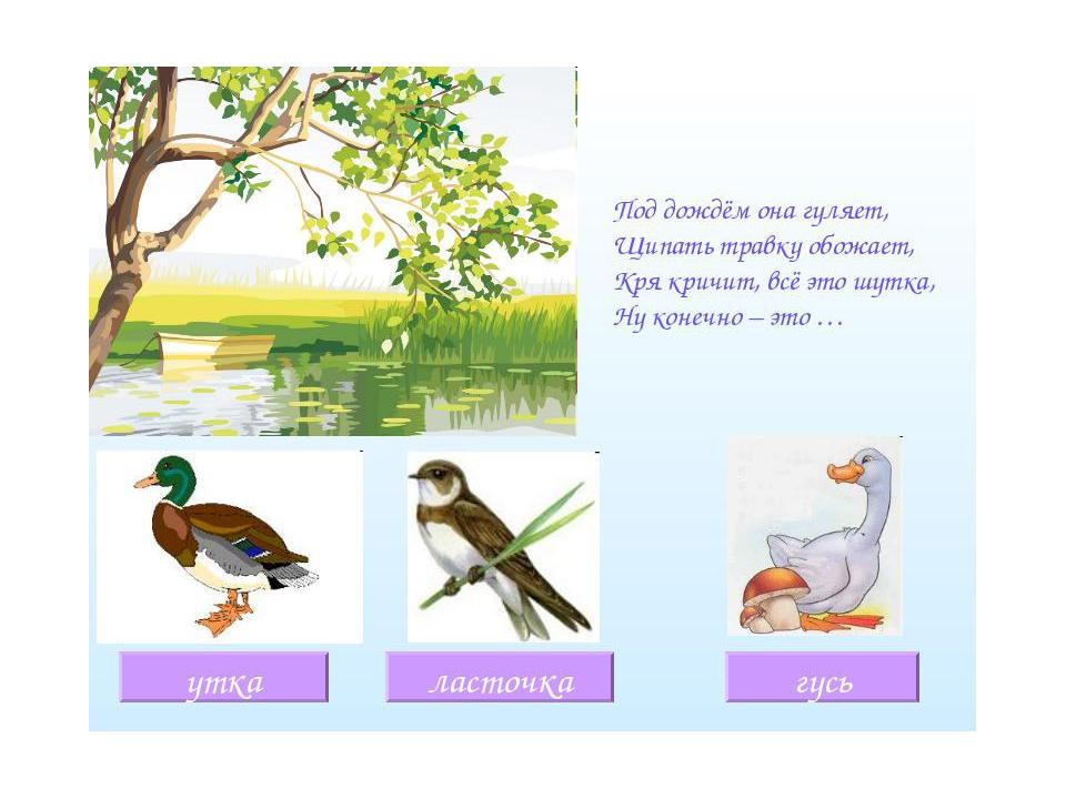 полностью загадки о птицах в картинках детям глубине корейского полуострова