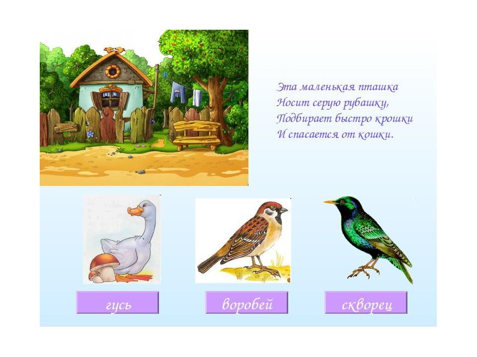 Загадки с картинками про птиц