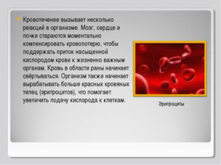 Кровотечение вызывает несколько реакций в организме. Мозг, сердце и почки ста