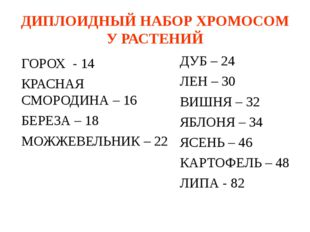 ДИПЛОИДНЫЙ НАБОР ХРОМОСОМ У РАСТЕНИЙ ГОРОХ - 14 КРАСНАЯ СМОРОДИНА – 16 БЕРЕЗА