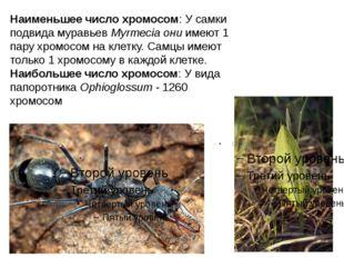Наименьшее число хромосом: У самки подвида муравьев Myrmecia они имеют 1 пару