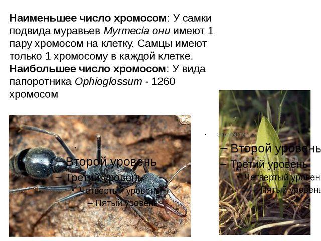 Наименьшее число хромосом: У самки подвида муравьев Myrmecia они имеют 1 пару...