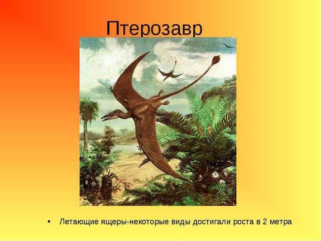 Птерозавр Летающие ящеры-некоторые виды достигали роста в 2 метра.