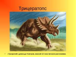 Трицератопс «Трехрогий» длина до 9 метров, массой 12 тонн питался растениями.
