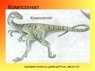 Компсогнат «изящная челюсть» длина до74 см., масса 3 кг.