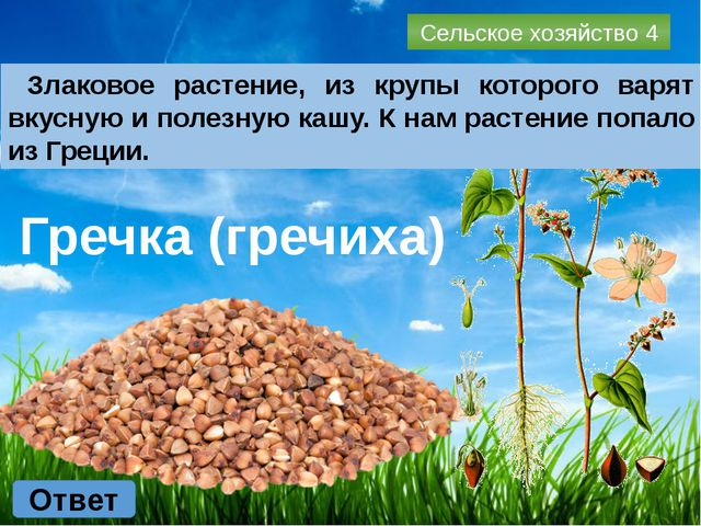 Промышленность 1 Ответ Какое название имеет знаменитый белорусский трактор?