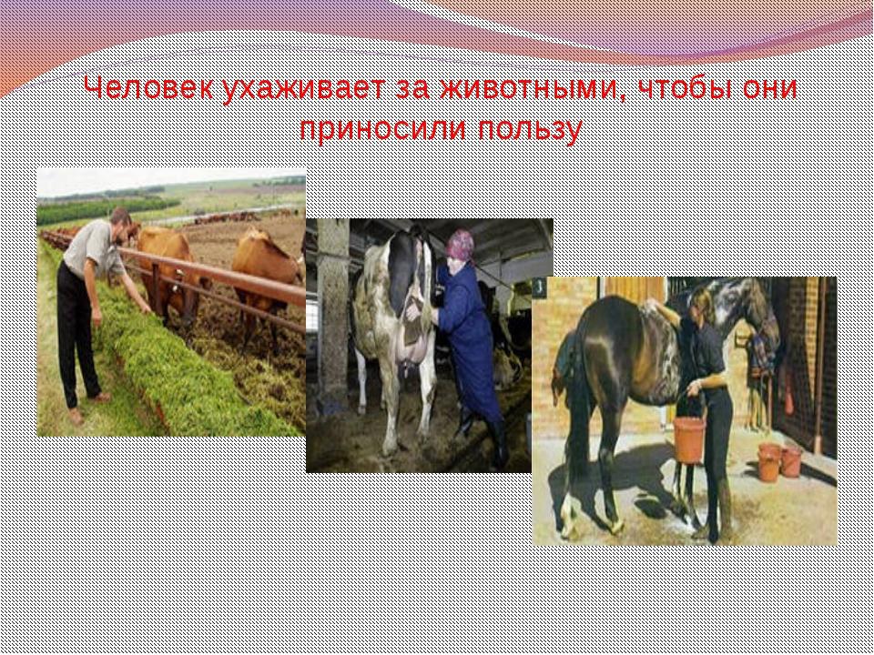 Человек ухаживает за животными, чтобы они приносили пользу