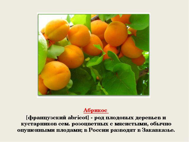 Абрикос [французский abricot] - род плодовых деревьев и кустарников сем. роз...