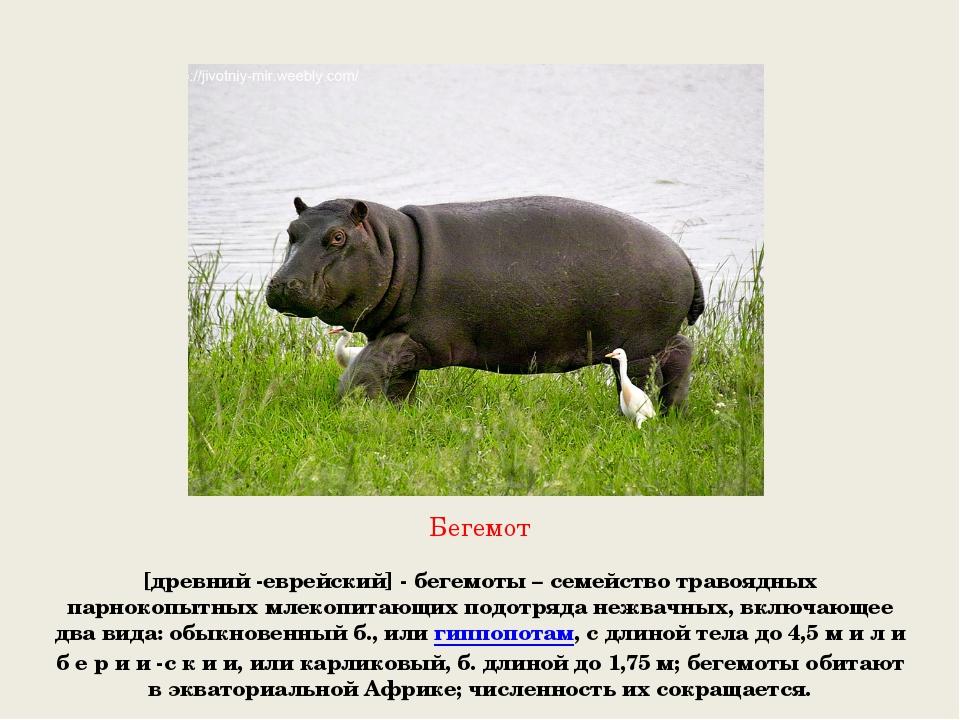 Бегемот [древний -еврейский] - бегемоты – семейство травоядных парнокопытных...
