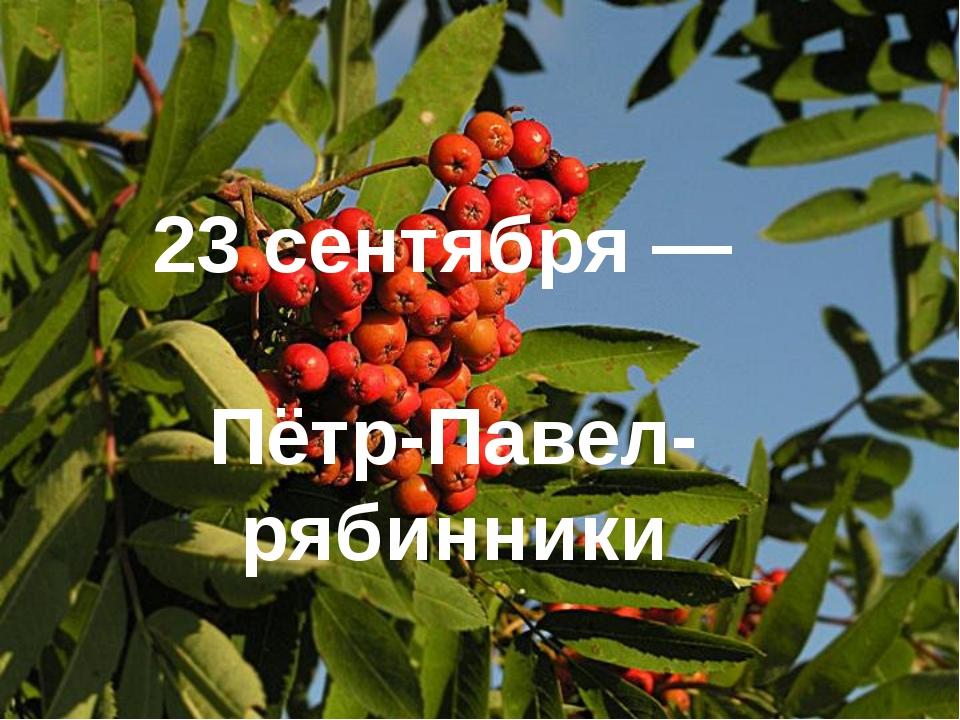 23 сентября— Пётр-Павел-рябинники