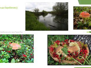Природа города Карабаново)) В городе Карабаново есть река Серая.Она является