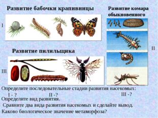 Развитие бабочки крапивницы Развитие комара обыкновенного I III II Определите
