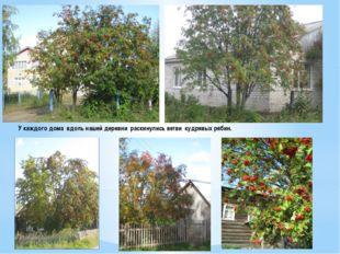 У каждого дома вдоль нашей деревни раскинулись ветви кудрявых рябин.