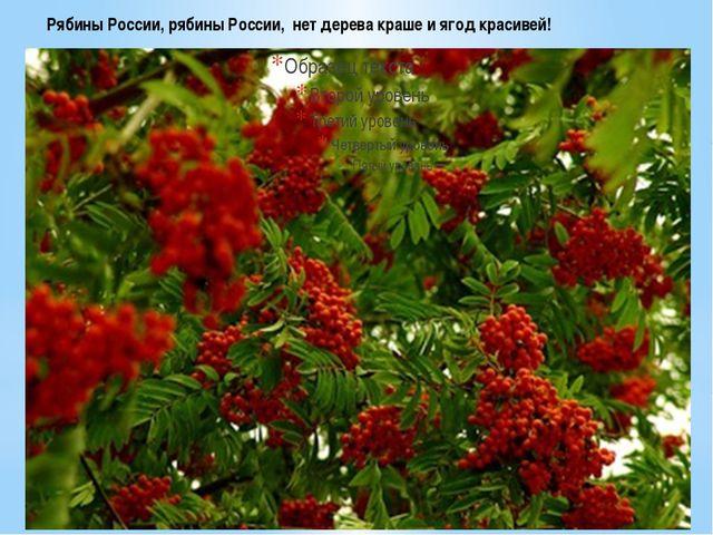 Рябины России, рябины России, нет дерева краше и ягод красивей!
