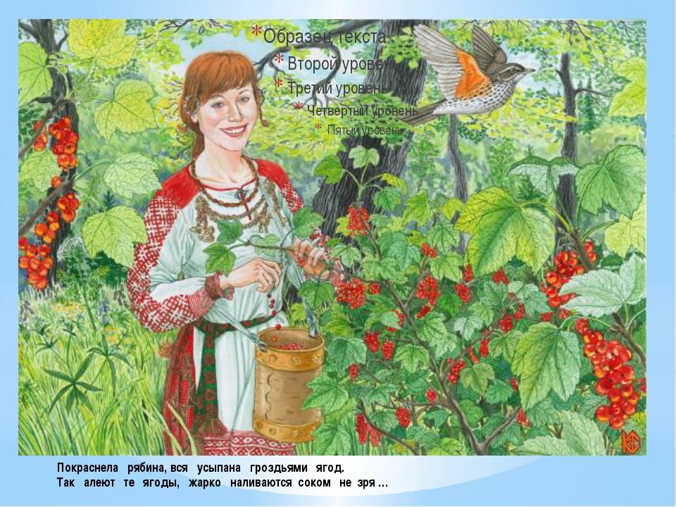 Покраснела рябина, вся усыпана гроздьями ягод. Так алеют те ягоды, жарко нали...