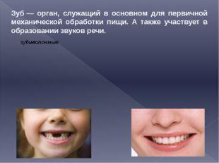 Зуб— орган, служащий в основном для первичной механической обработки пищи. А