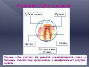 Строение зуба в разрезе Пульпа зуба состоит из рыхлой соединительной ткани с