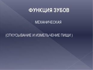 ФУНКЦИЯ ЗУБОВ МЕХАНИЧЕСКАЯ (ОТКУСЫВАНИЕ И ИЗМЕЛЬЧЕНИЕ ПИЩИ )