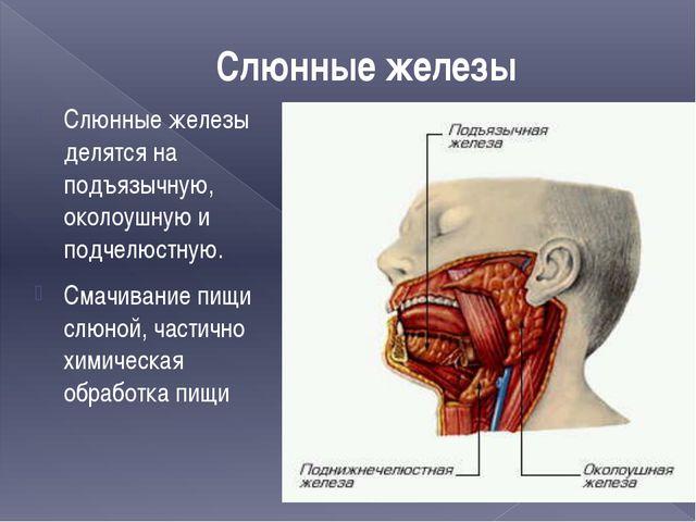 Слюнные железы Слюнные железы делятся на подъязычную, околоушную и подчелюстн...