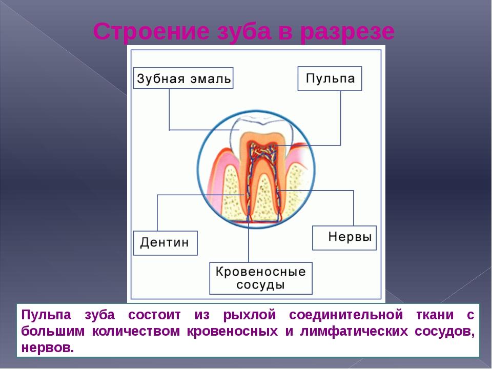 Строение зуба в разрезе Пульпа зуба состоит из рыхлой соединительной ткани с...