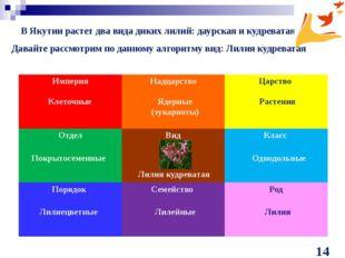 В Якутии растет два вида диких лилий: даурская и кудреватая Клеточные Ядерные