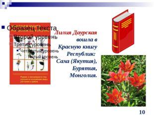 Лилия Даурская вошла в Красную книгу Республик: Саха (Якутия), Бурятия, Монг