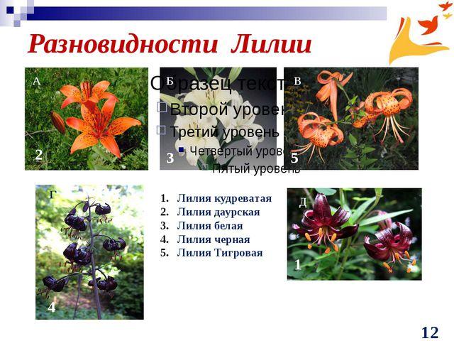 Разновидности Лилии Лилия кудреватая Лилия даурская Лилия белая Лилия черная...