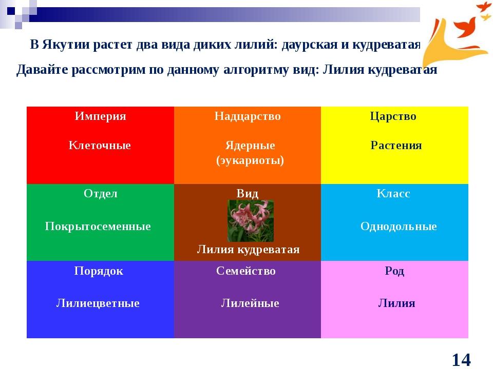 В Якутии растет два вида диких лилий: даурская и кудреватая Клеточные Ядерные...