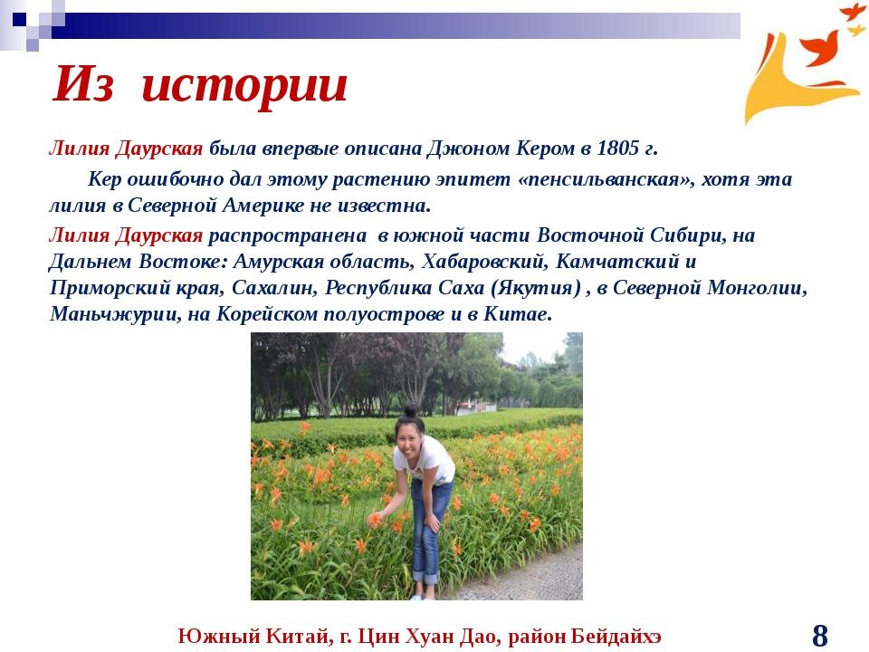 Из истории Лилия Даурская была впервые описана Джоном Кером в 1805 г. Кер оши...